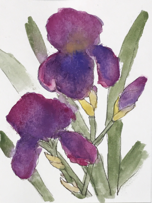 Tennessee iris elley may design tennessee iris izmirmasajfo